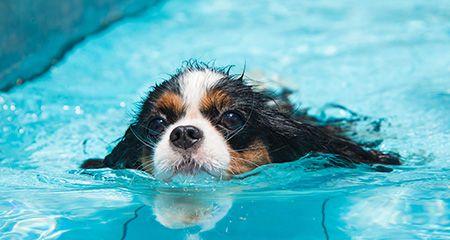 Як купати вихованців: важливі поради