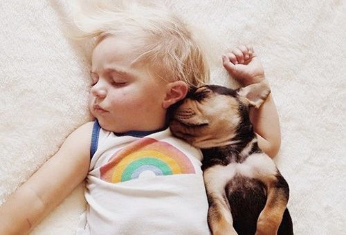 Яка тварина завести в будинку з маленькою дитиною