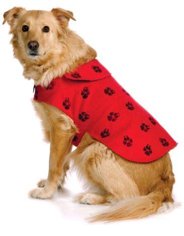 одяг для собак своїми руками - фото і відео