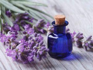 Лаванда при вагітності: не тільки приємний аромат!