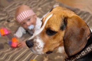 Дитину вкусила собака
