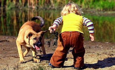 дитина боїться собаки 5