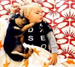 дитина боїться собаки 4