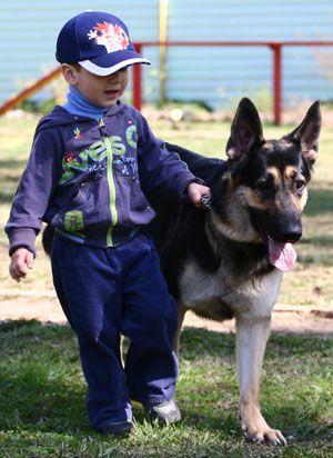 Дитина вдома: перша зустріч з собакою