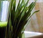 Сік з паростків пшениці (вітграсс) при вагітності і після пологів