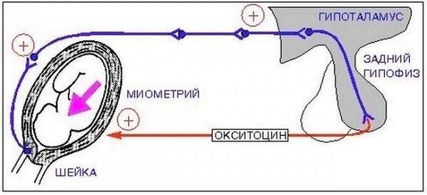 Стимуляція пологів за допомогою окситоцину: так чи це безпечно?