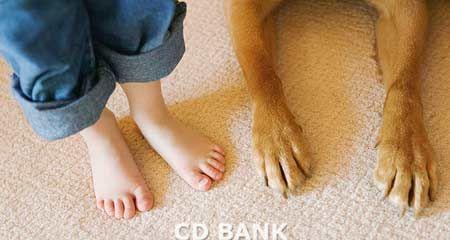 вибираємо дитині домашню тварину